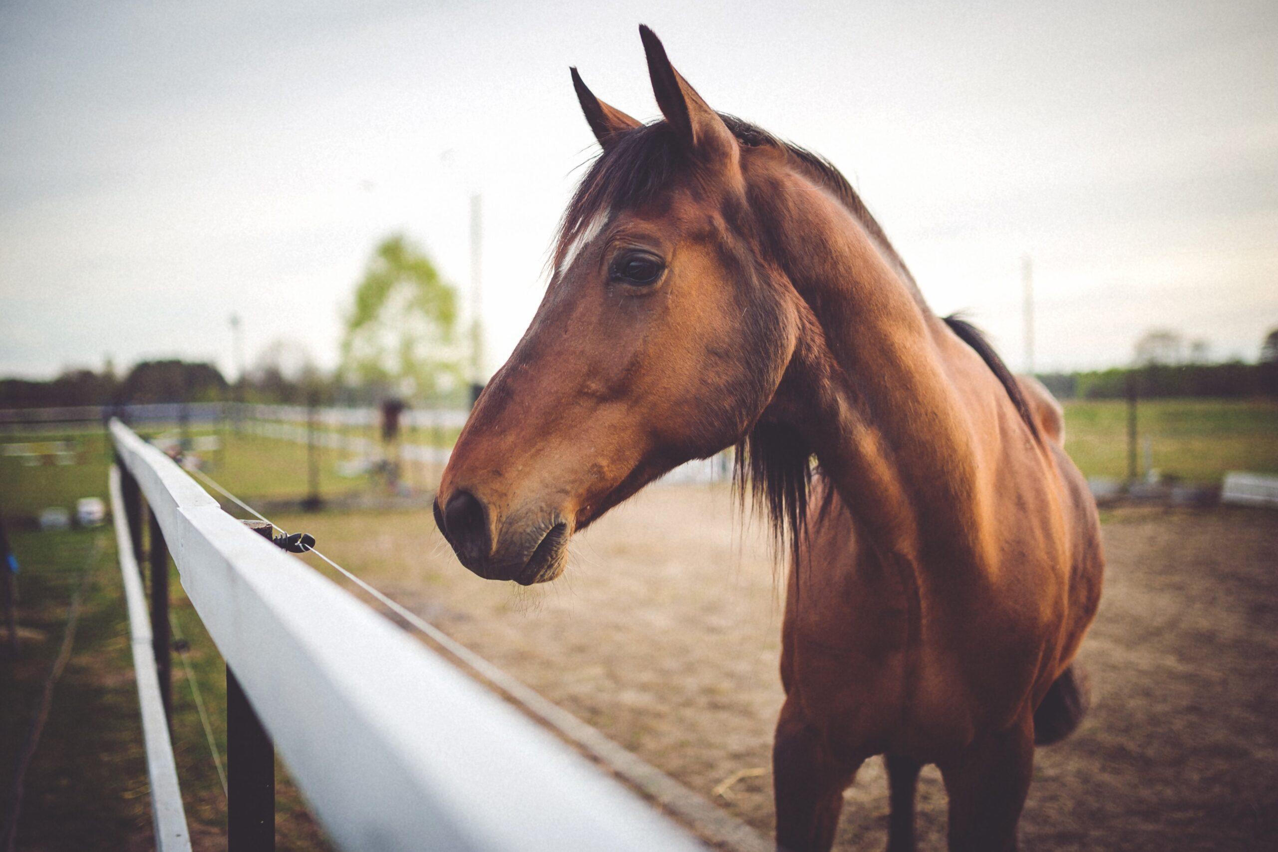 Agrobs hestefoder og træbriketter til skarpe priser hos Pillemadsen