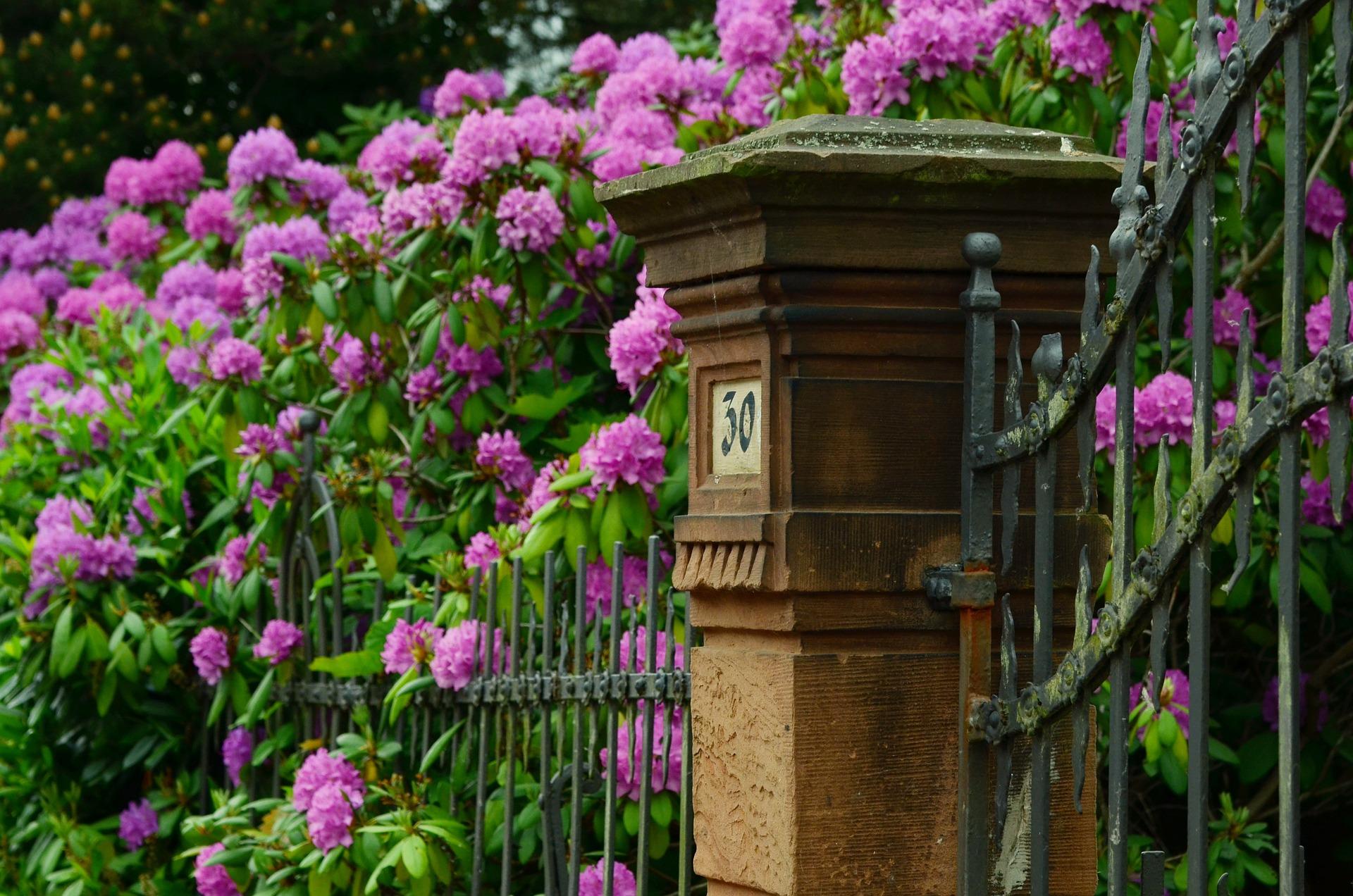 Køb rhododendron gødning og planter billigt online